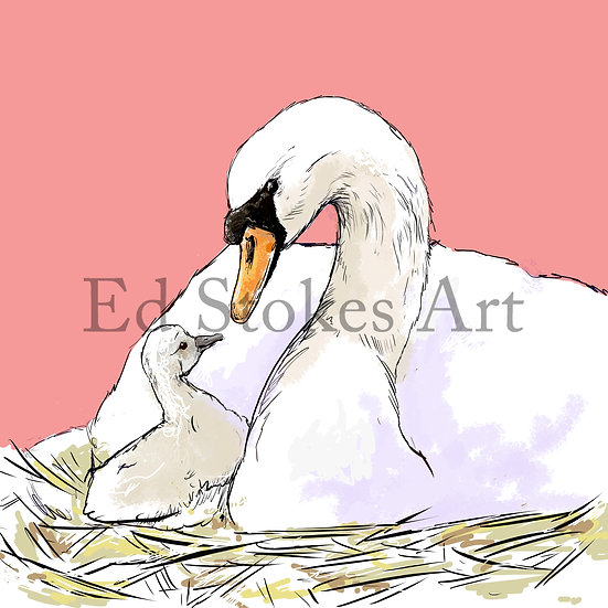 Swan and Cygnet Art Print