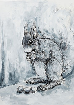 Red Squirrel_A6.jpg