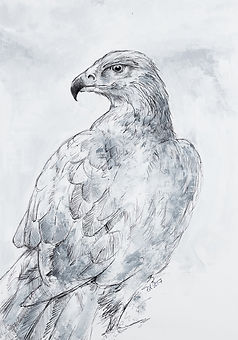 eagle_ed_stokes_art.jpg