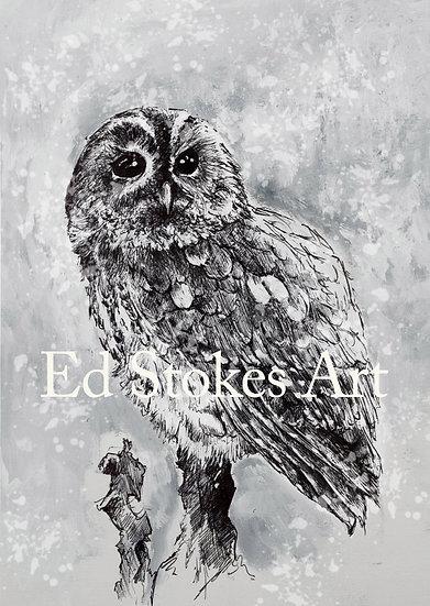 Tawny Owl Five Packs