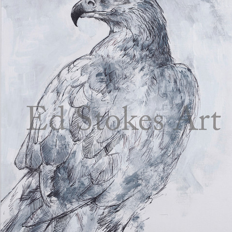 Golden eagle A5.jpg
