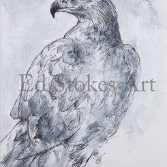 Golden eagle A5.jpg