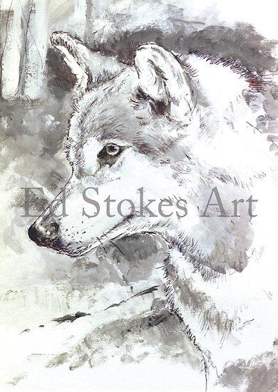Lone Grey Wolf