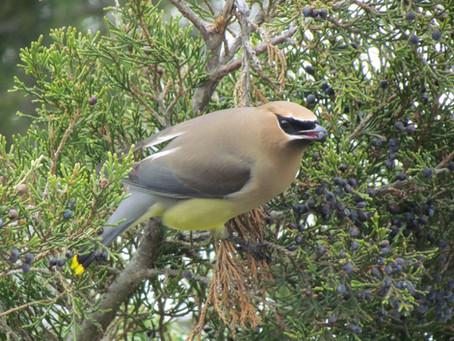 Birding on Long Island