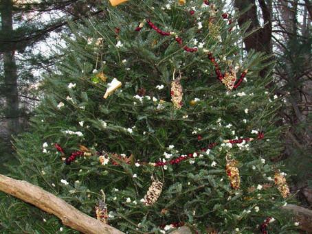 Repurpose Your Christmas Tree