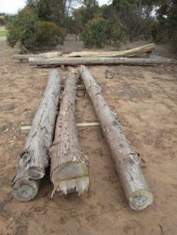 Raw timber posts