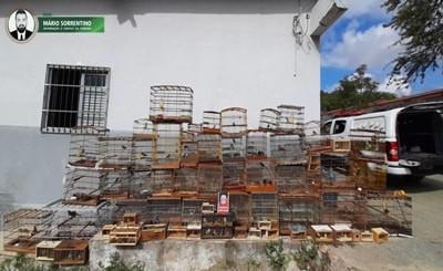 PM apreende mais de 100 pássaros na Feira da Prata, em Campina Grande