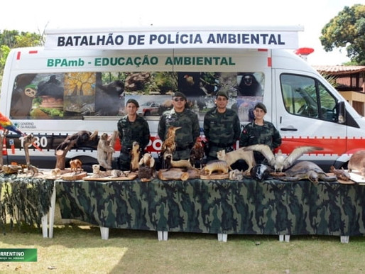 Jacaré que apareceu morto na orla de João Pessoa será usado em ações de educação ambiental