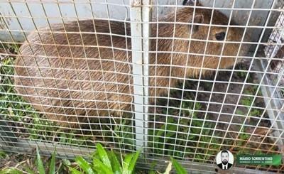 PMPB orienta população a fazer a entrega voluntária de animais silvestres para evitar punições