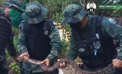 Polícia Militar resgata 18 cobras em uma semana, sem casos de pessoas feridas ou animais machucados