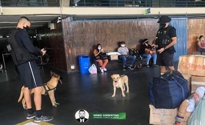 Polícia Militar treina novos cães farejadores para auxiliar nas operações contra os crimes na PB