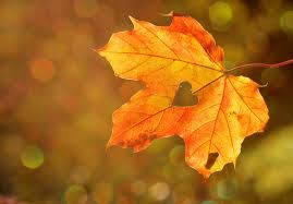Getting Your Home Exterior Ready For Fall