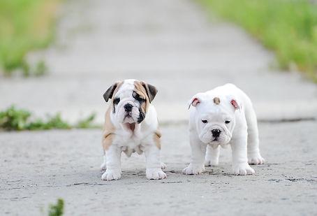 Pet sitting, Pet care, Dog walker, Pet, Dog, Exotic, Hamster, Animal, Cat, Kitten, Puppy, Training, Bird, Snake, Guinee Pig, Rat, Mouse, Fish, Lizard, Exotic, Small Mammal, Pocket Pet,