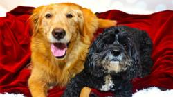 Pet Care, Pet sitting, Dog Walking