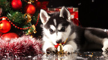 How To Keep Your Pets SAFE, HEALTHY & HAPPY This Holiday Season!