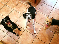 Pet CarePet sitting, Pet care, Dog walker, Pet, Dog, Exotic, Hamster, Animal, Cat, Kitten, Puppy, Training, Bird, Snake, Guinee Pig, Rat, Mouse, Fish, Lizard, Exotic, Small Mammal, Pocket Pet,