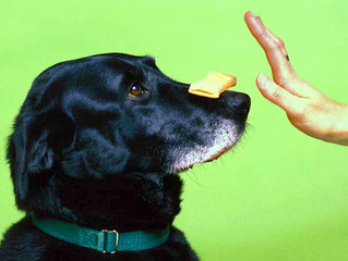 All Dogs Deserve An Education - Give Them Something To Bark About!