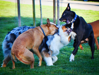 BEWARE!! THE DANGERS OF DOG PARKS!