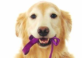 Pet sitting, Pet care, Dog walker, Pet, Dog, Exotic, Hamster, Animal, Cat, Kitten, Puppy, Training,