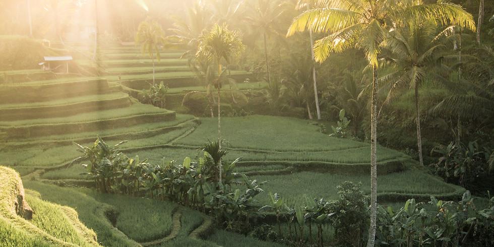 Balinese Healing Retreat