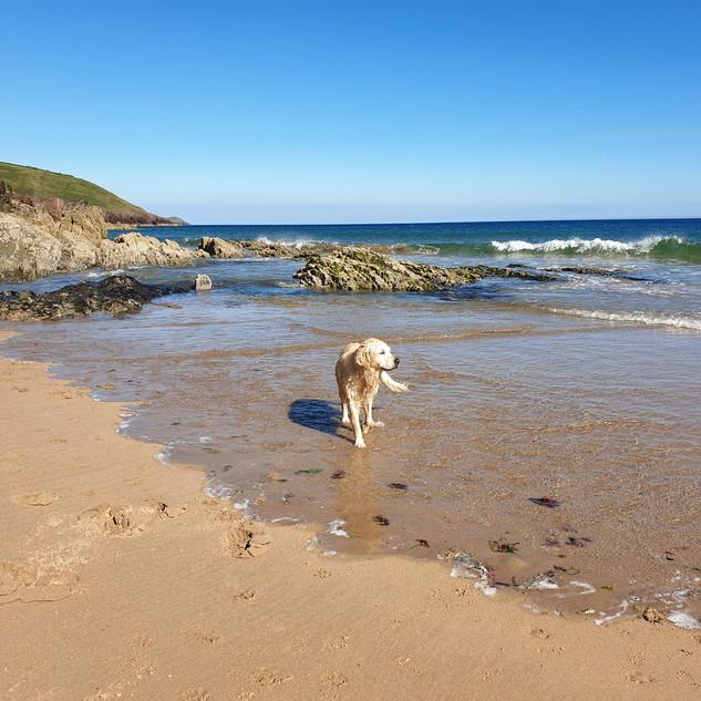 Myfi on beach.jpg