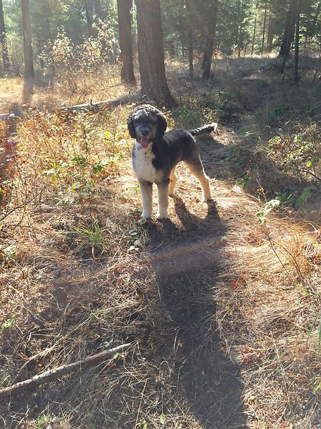dog standing in forest sunlight