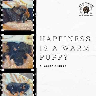 Happiness is a warm puppy.png