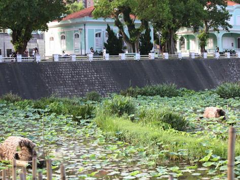 <澳門獲選十大魅力濕地  保育人士倡生態旅遊> Macau Awarded Top Ten Wetland, Environmentalists Advocate Ecological T