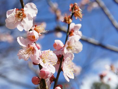 春日大熱 京都