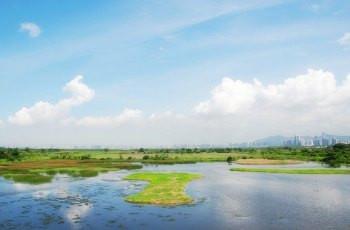仲夏夜歷奇/望星空/看候鳥遷徙,這裡有你絶不能錯過的濕地!