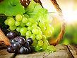 grapes_picnik.jpg