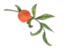 Peach with branch.png