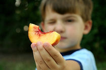 Vossler Boys - Peaches 09-2 003.jpg