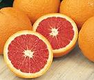 Cara-Cara-Orange-Semi-dwarf.jpg