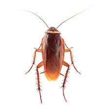 plagospeed-cucarachas_0.jpg