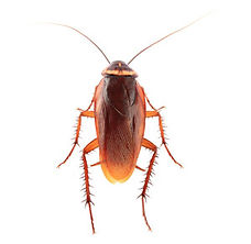 plagospeed-cucarachas.jpg