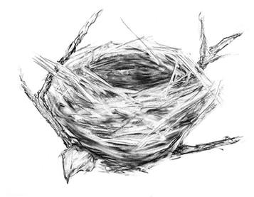 """Empty Nest 3"" Kirsti Aasheim/ Charcoal on paper 32x41 cm"