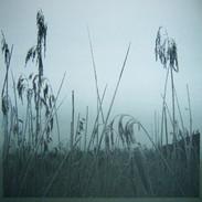 """Frosty Morning"" Kirsti Aasheim/ Screenprinting/ 40x40 cm"