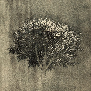 """Standing Strong 3""  Kirsti Aasheim/ etching/ 11,5x14cm"