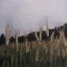 """""""Cornfield""""  Kirsti Aasheim/ acrylic on mdf/ 30x30 cm"""