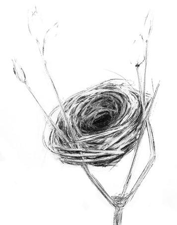 """Empty Nest 4"" Kirsti Aasheim/ Charcoal on paper 32x41 cm"