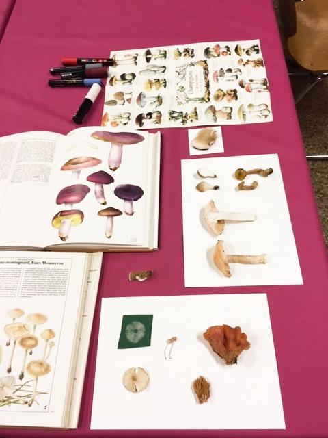 Atelier champignon