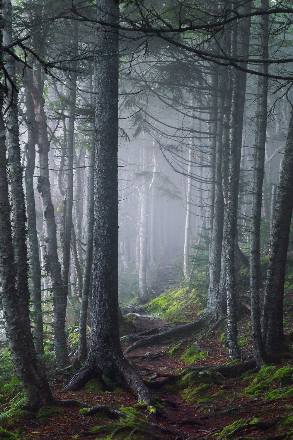 Fog along a path in the forest.