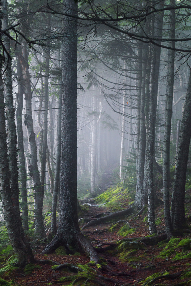 5 Tips For Photographing Fog