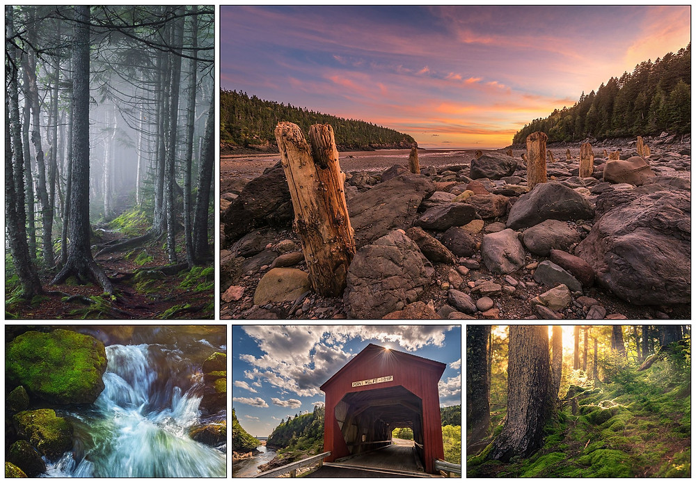 A collage of photos showing scenes from Fundy National Park, NB. All photos © Tracy Munson 2018.