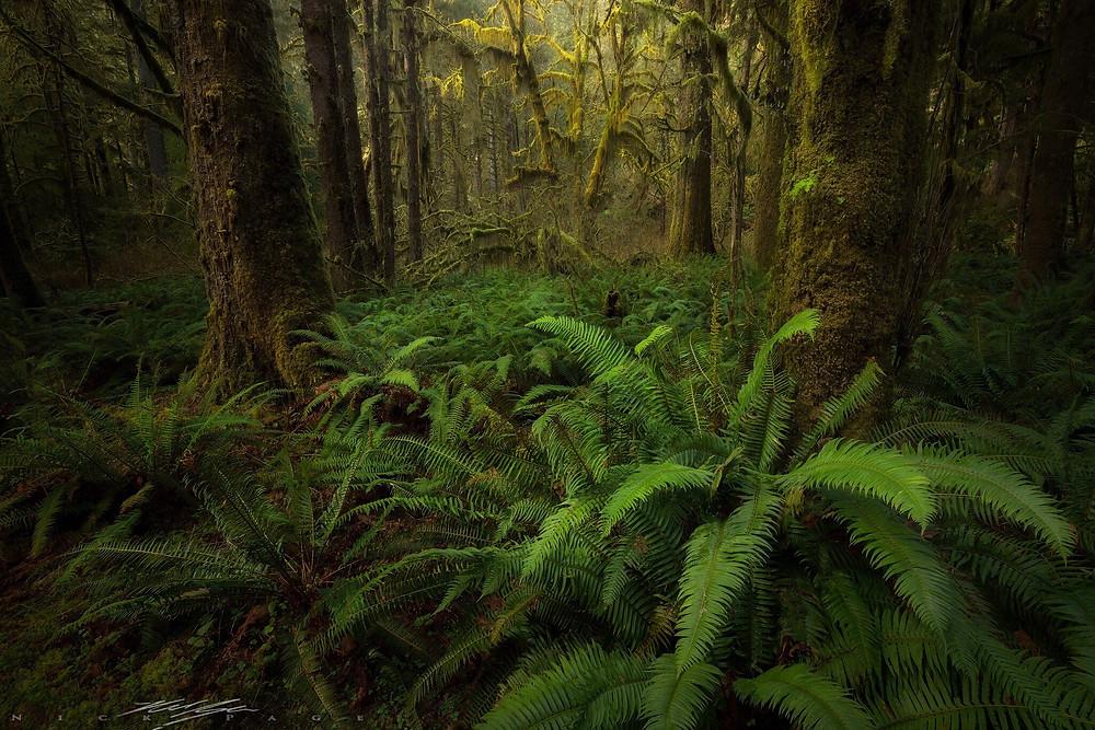 Landscape photo by Nick Page Photography