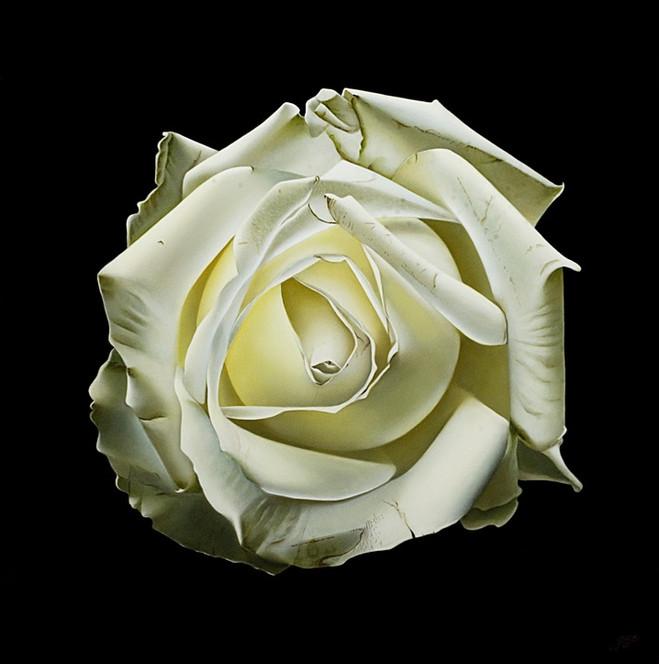 ROSE FROM MY GARDEN IX