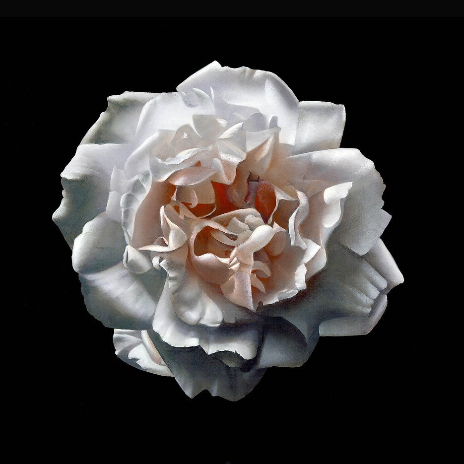 ROSE FROM MY GARDEN I