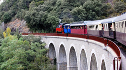 train-bambous.jpg
