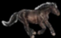 sportpaardenmasseur.png